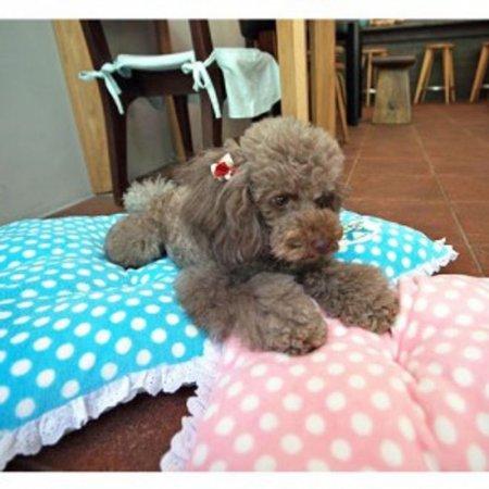 강아지 고양이 방석 쿠션 매트 베드 침대 미디움