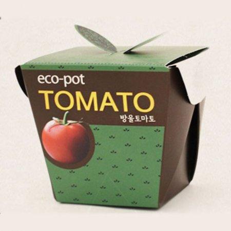 방울토마토 미니화분 상자화분 홈가드닝 식물키우기