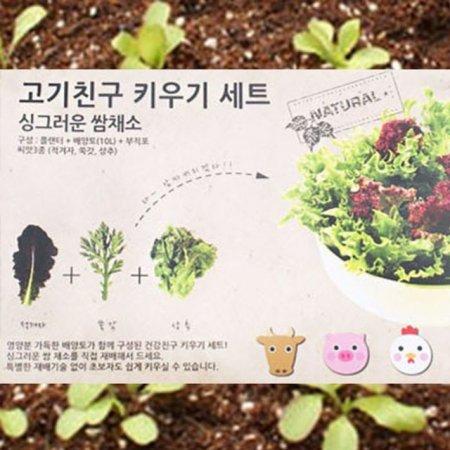 쌈채소 화분 상추화분 미니텃밭 홈가드닝 식물키우기