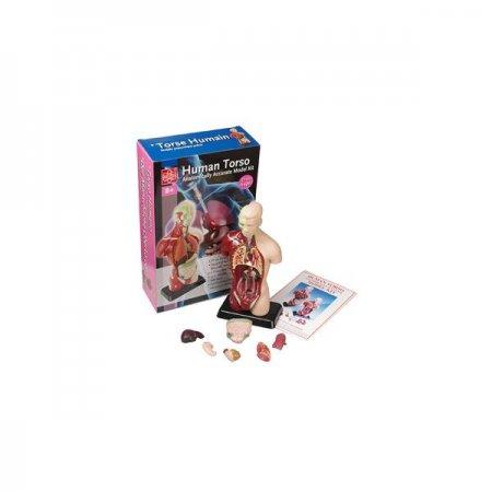 에듀토이 인체모형 소 인체모형 교육용 장난감